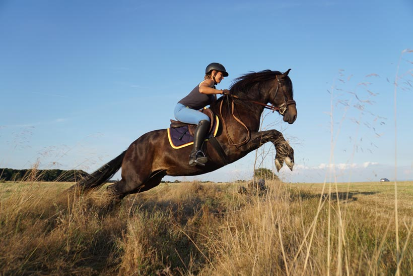 Warum machen Pferde (at liberty) mit? Wie motiviere ich mein Pferd?